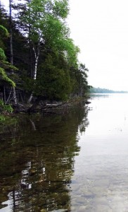 June 2019 Government Island Shoreline