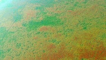 Weevil Field Work_2011-3